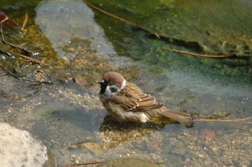 :사진마을: - 참새의 목욕