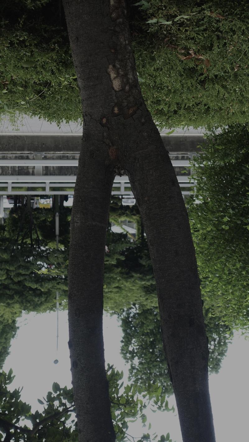 skj18.jpg