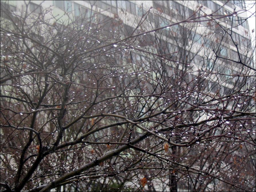봄비3.jpg