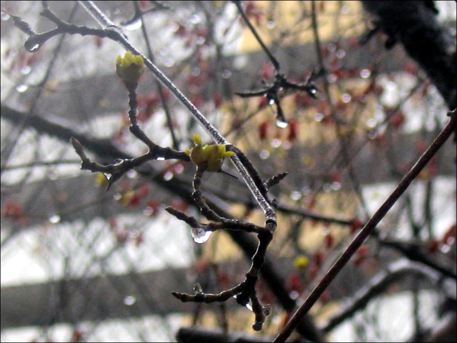 봄비7.jpg