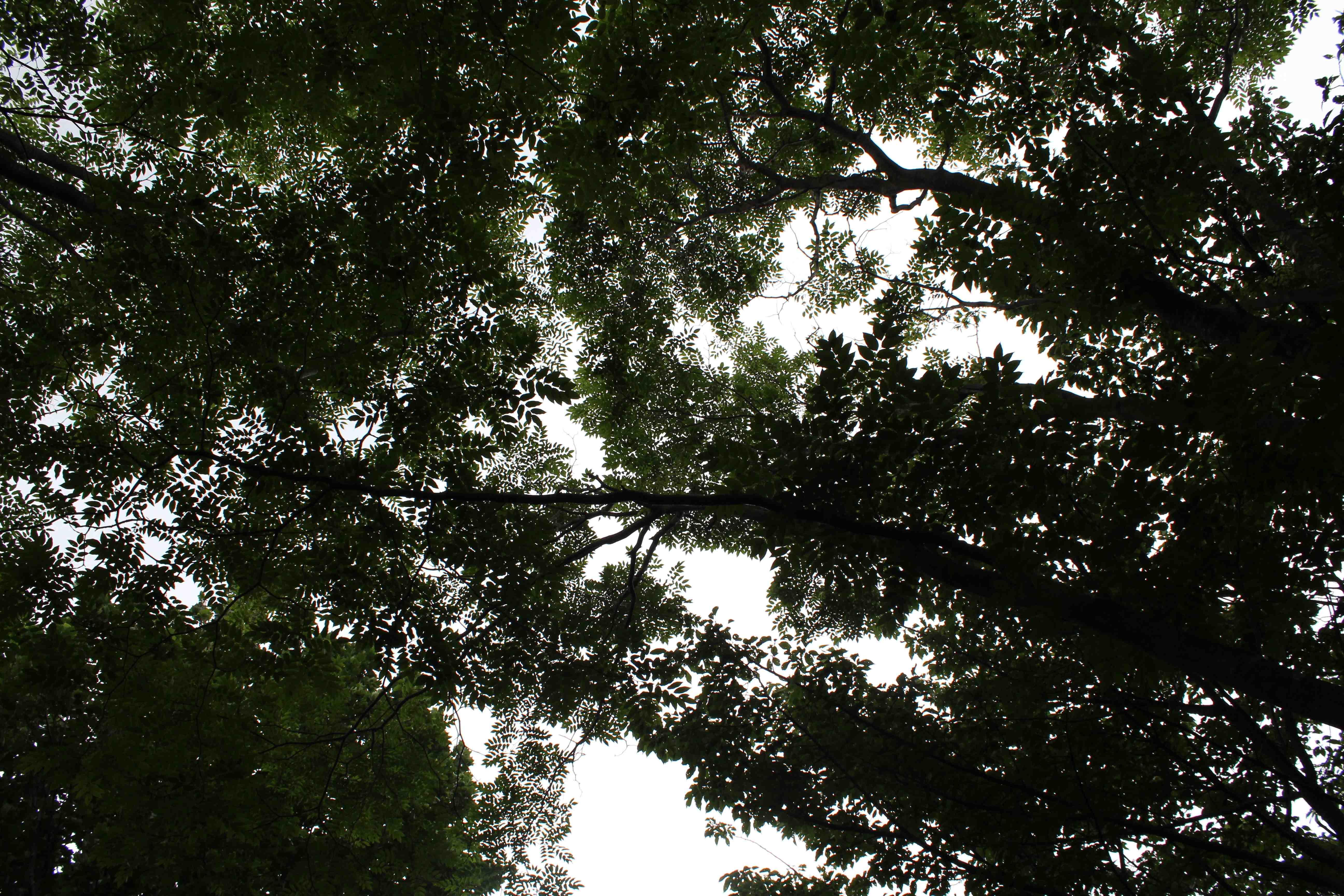 나무잎과 하늘.jpg