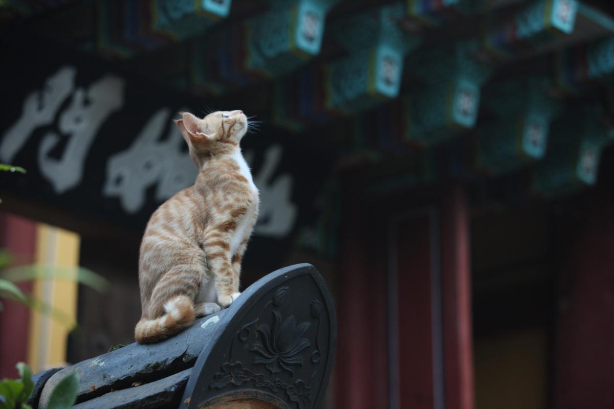 절집 고양이.jpg
