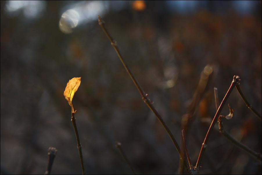 빛1.jpg