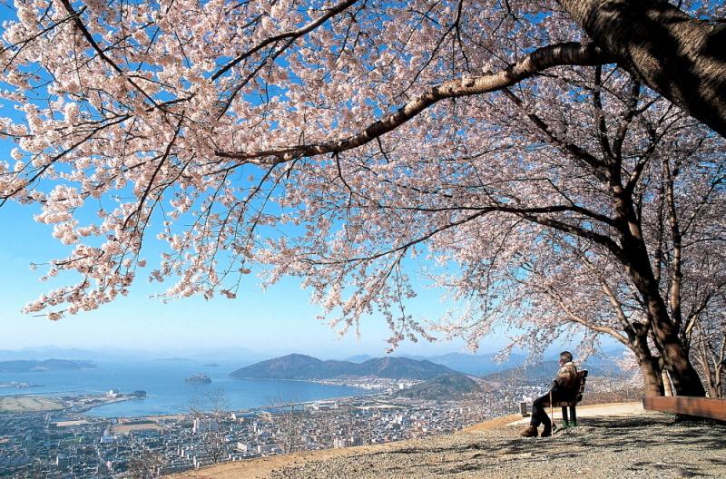 2003.11.29 제1회 진해 관광사진공모전 -입선- '기다림' 10만원.jpg