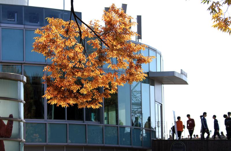 autumn00999.jpg