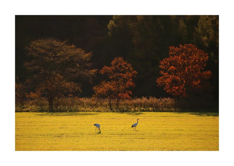 crane01.jpg