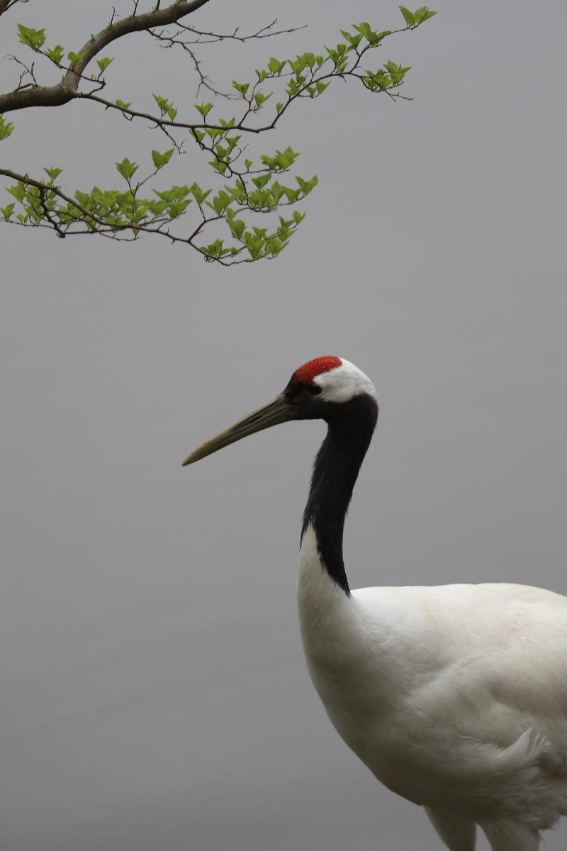 crane06.jpg