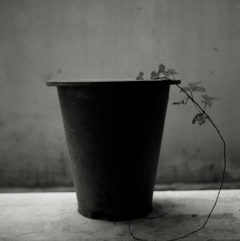 botanic004.jpg