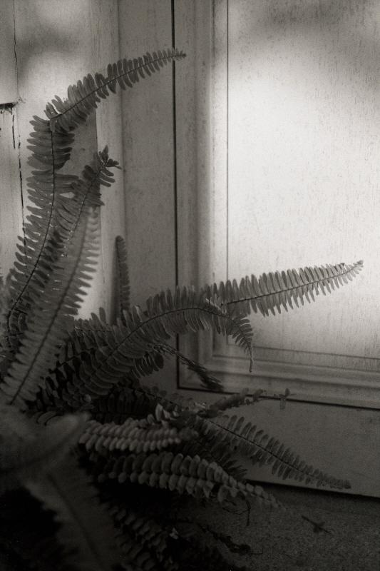 botanic006.jpg