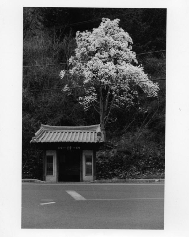 tree0009.jpg