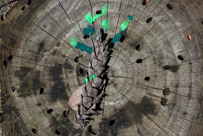 tree0017.jpg