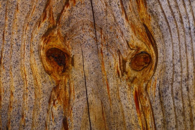 tree0039.jpg