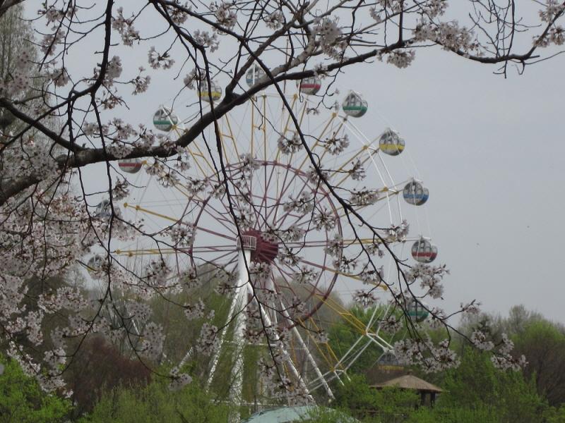tree0041.jpg